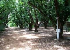 Daly River Mango Farm